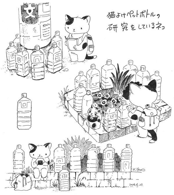 猫よけペットボトルの研究をしている猫